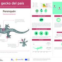 Infografía: Perenquén