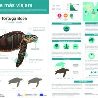 Infografía:  Tortuga Boba