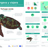 Infografía: Tortuga verde