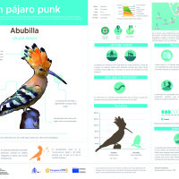 Infografía: Abubilla