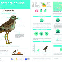 Infografía: Alcaraván