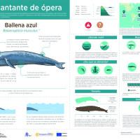 Infografía:   Ballena azul