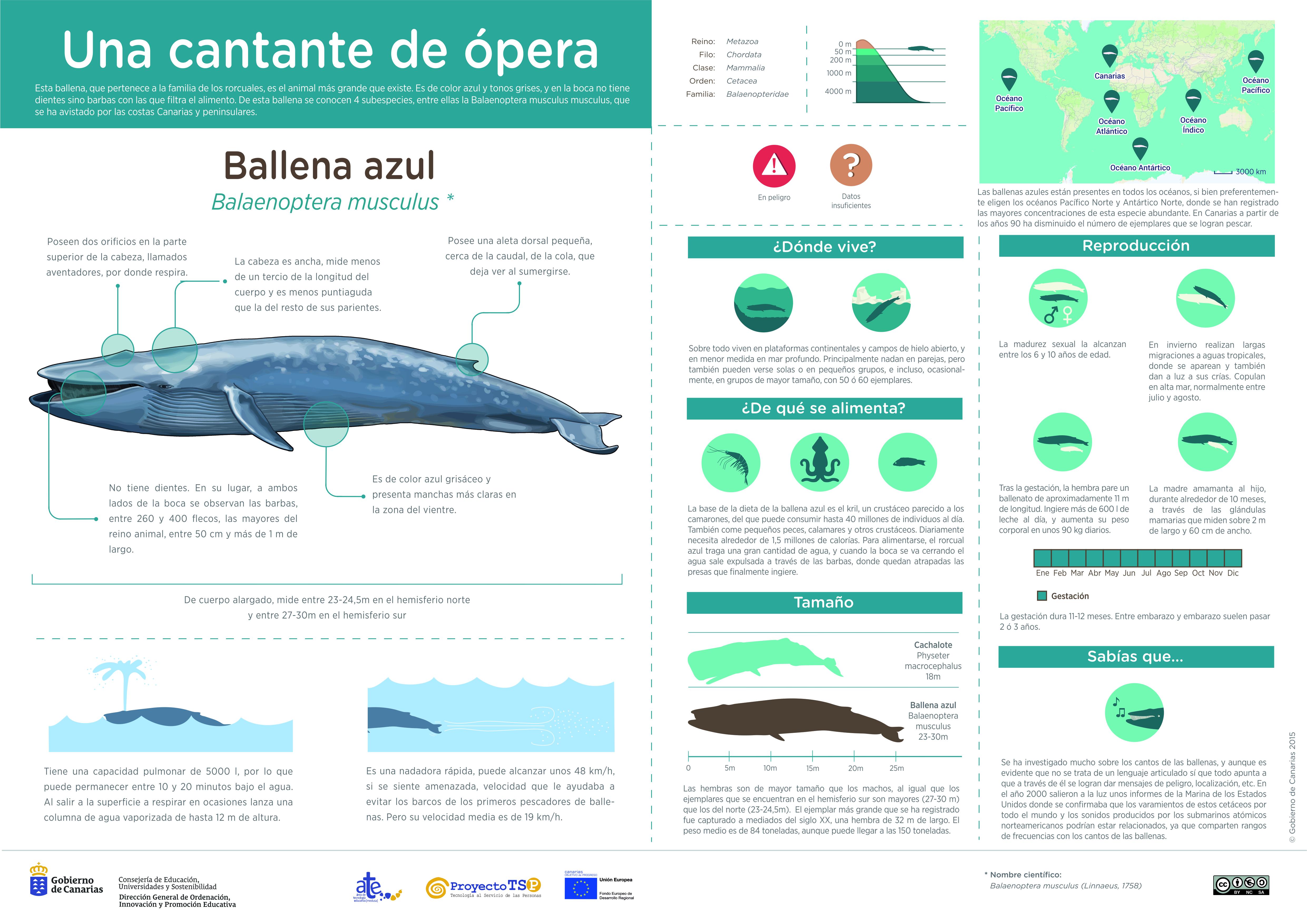 Infografía: Ballena azul » Recursos educativos digitales