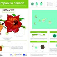Infografía: Bicacarera
