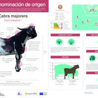 Infografía: Cabra majorera