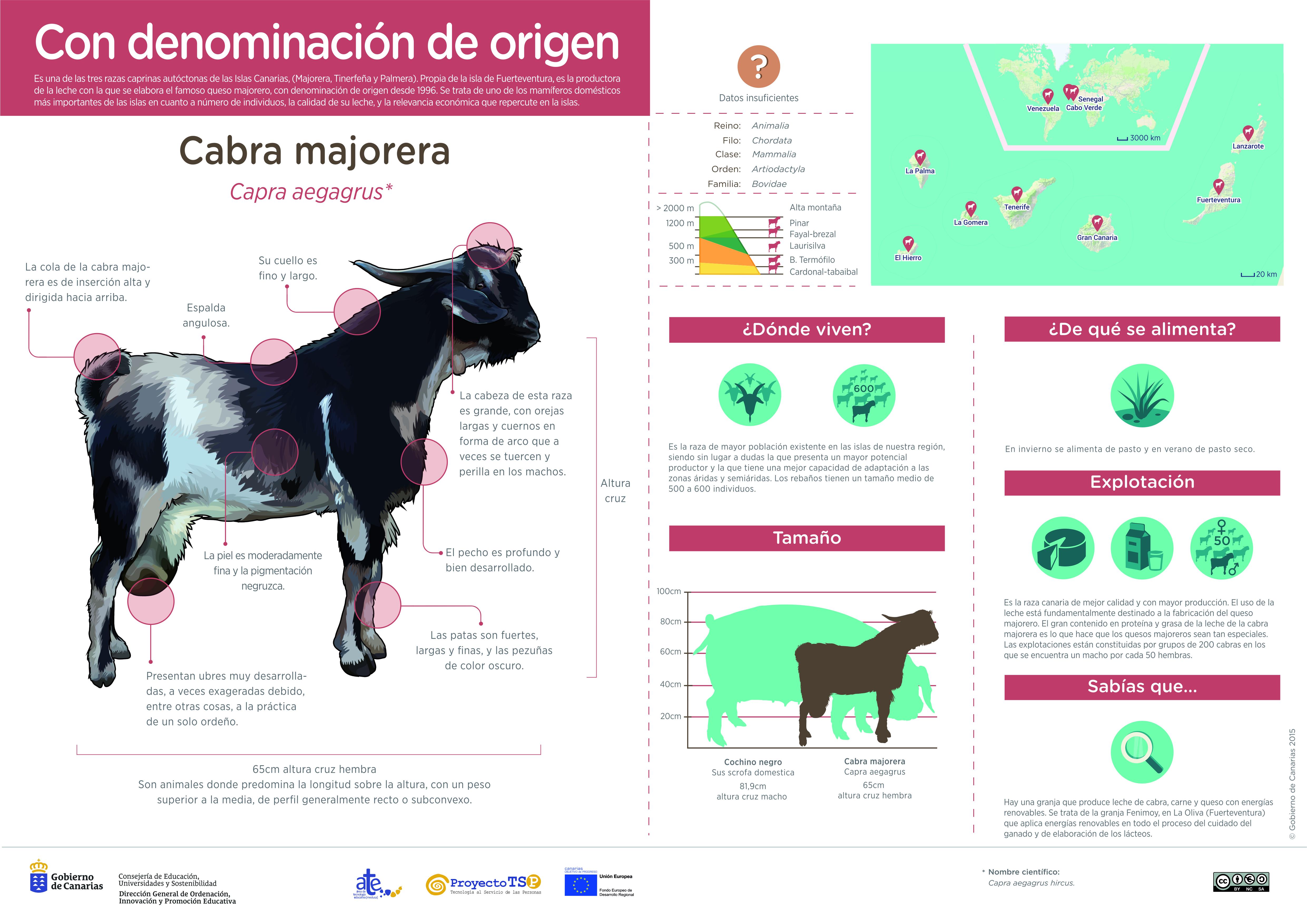 Infografía: Cabra majorera » Recursos educativos digitales
