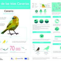 Infografía: Canario