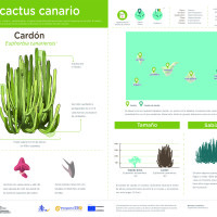Infografía: Cardón