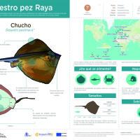 Infografía: Chucho