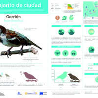 Infografía: Gorrión