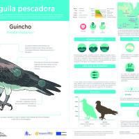 Infografía: Guincho