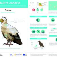 Infografía: Guirre