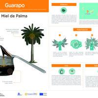 Infografía: Miel de Palma