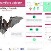 Infografía: Murciélago orejudo