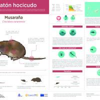Infografía: musaraña