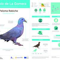 Infografía: Paloma rabiche
