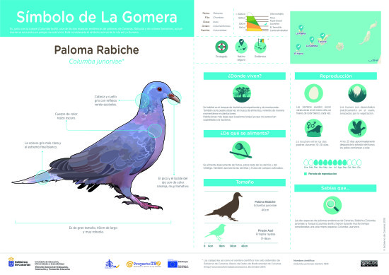 Infografía: Paloma rabiche » Recursos educativos digitales