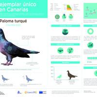 Infografía:  Paloma Turqué