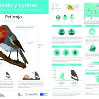 Infografía:  Petirrojo