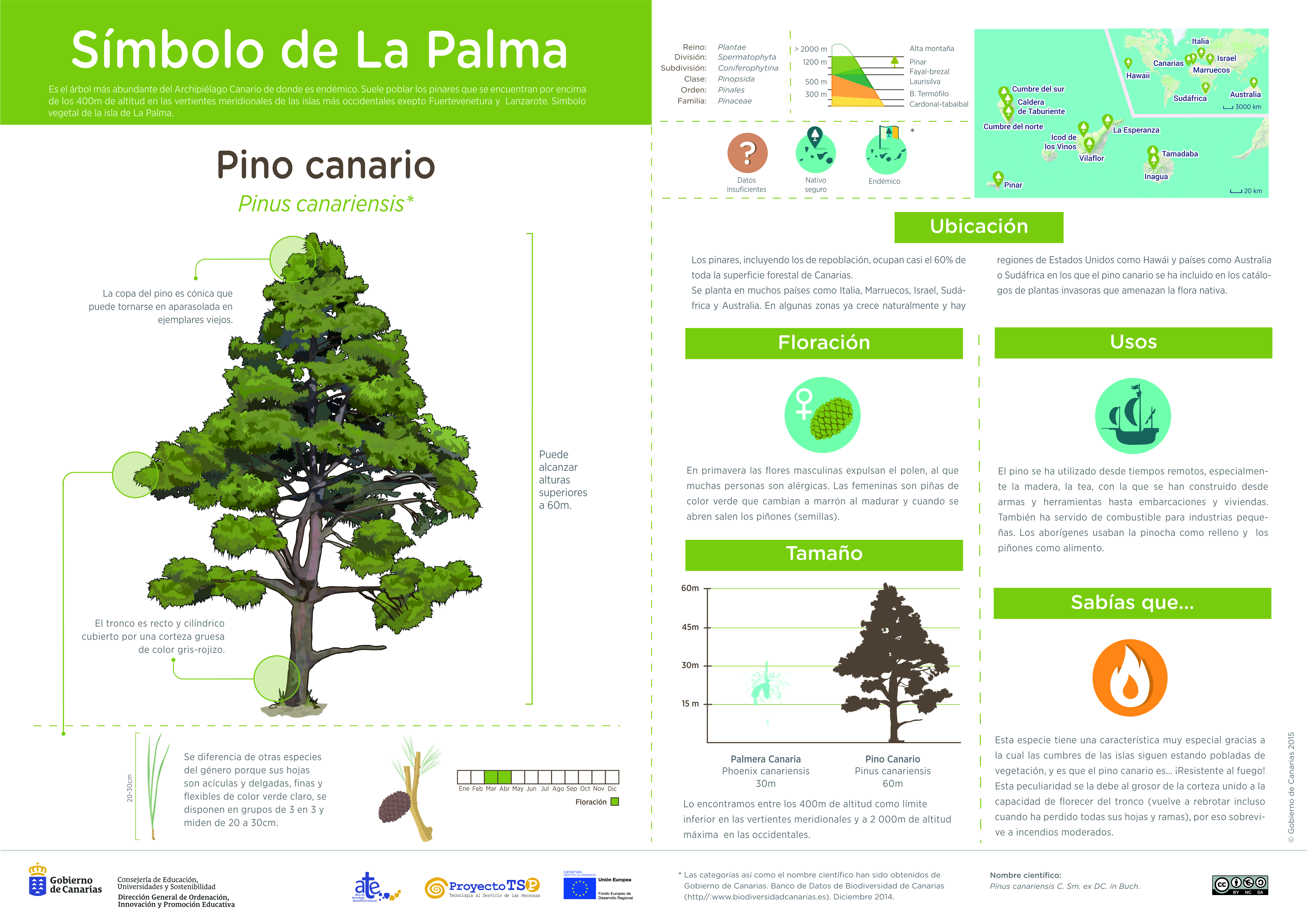 Infografía: Pino » Recursos educativos digitales