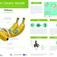 Infografía: Plátano de Canarias