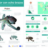 Infografía:  Pulpo