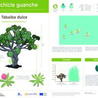 Infografía: Tabaiba
