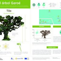 Infografía: Tilo