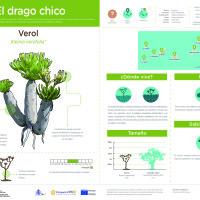 Infografía: Verol