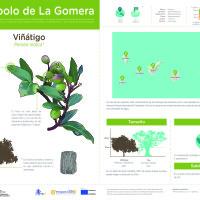 Infografía: Viñátigo
