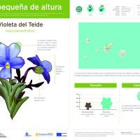 Infografía: Violeta Teide