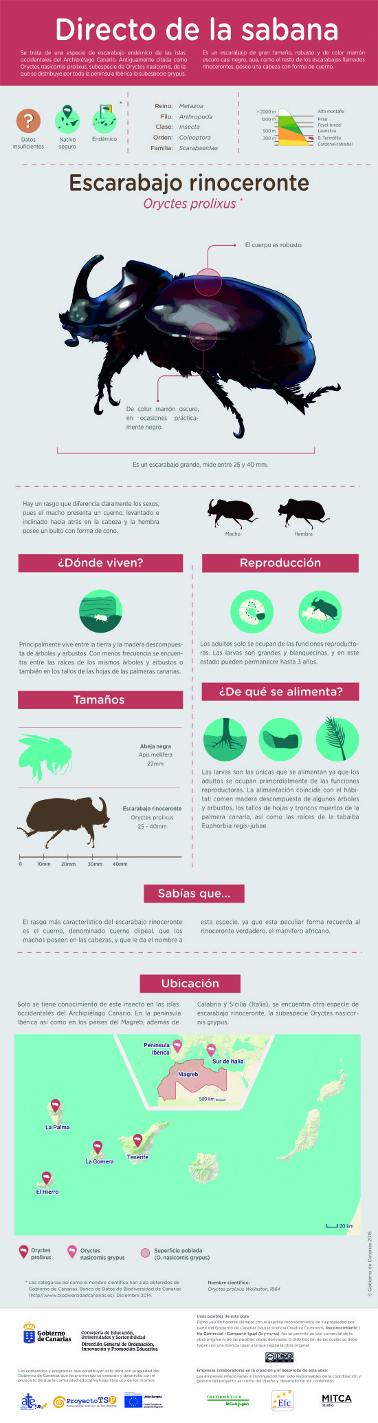 Infografía: Escarabajo rinoceronte » Recursos educativos digitales