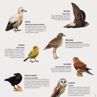 Lámina: aves de zona bajas