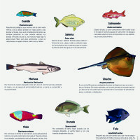 Lámina: fauna marina, peces de fondo 2