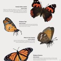 Lámina: Mariposas