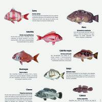 Lámina: Fauna marina, peces de fondo 1