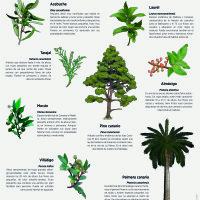 Lámina: Flora árboles