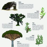 Lámina: Flora árboles 2