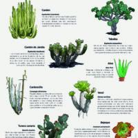 Lámina: plantas y arbustos 2