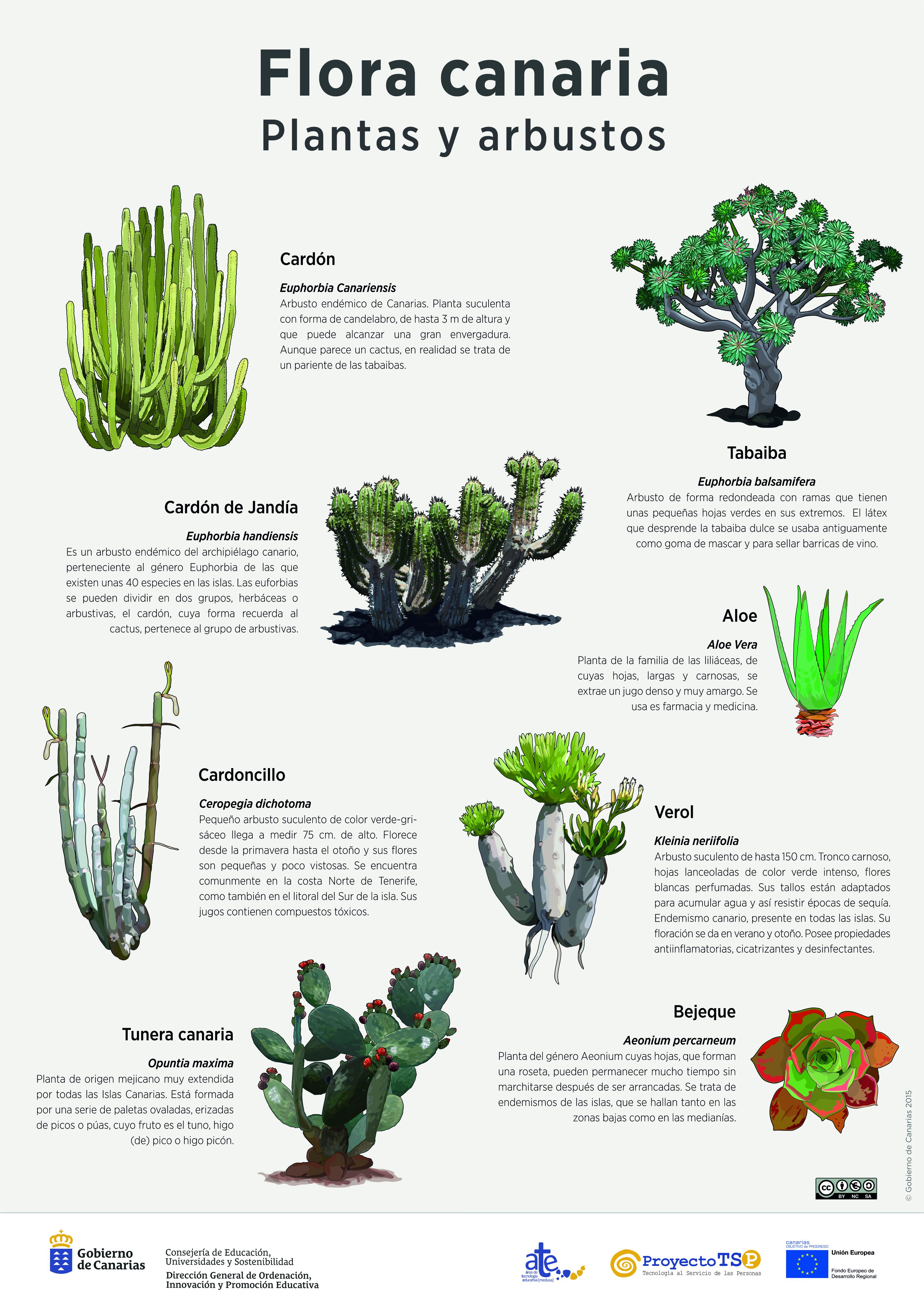 Lámina: plantas y arbustos 2 » Recursos educativos digitales