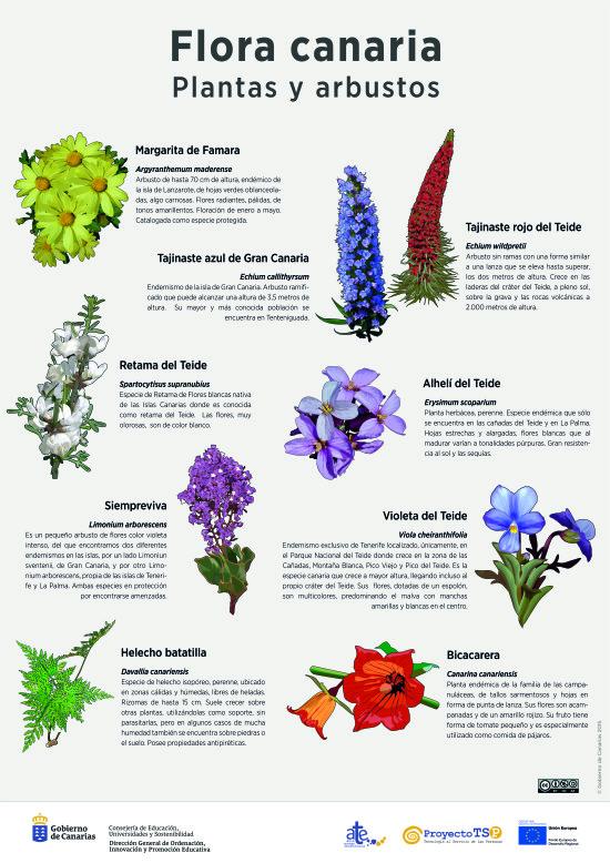L mina plantas y arbustos 3 recursos educativos digitales for Plantas y arbustos de exterior