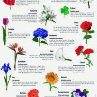 Lámina: Flores