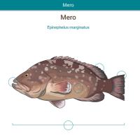 HTML5: Mero