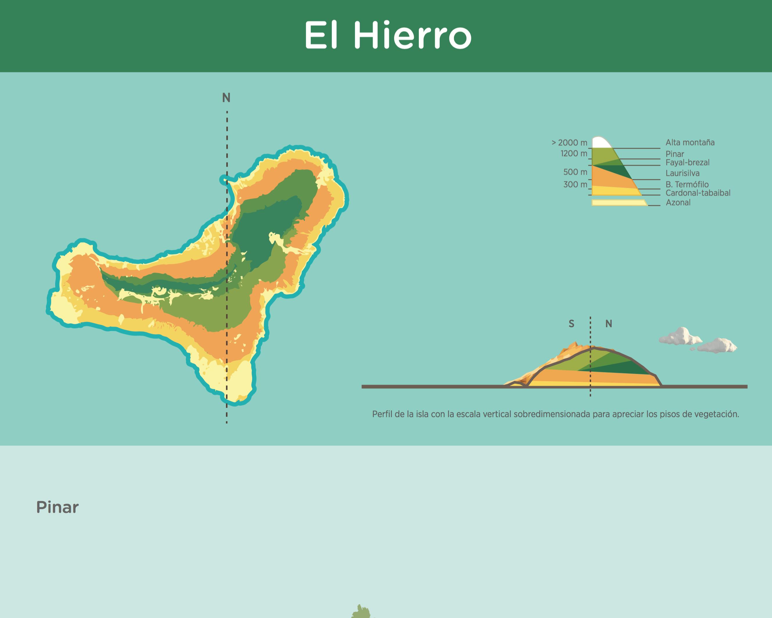 Infograf a pisos de vegetaci n de el hierro recursos for Pisos de vegetacion canarias