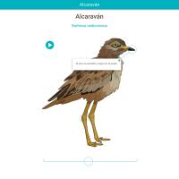 HTML5: Alcaraván