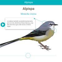 HTML5: Alpispa