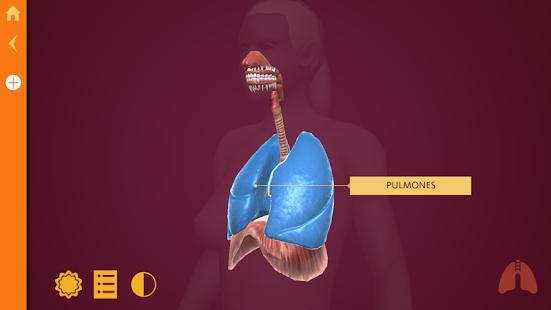Anatomy » Recursos educativos digitales