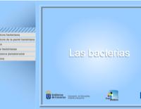 Las Bacterias.