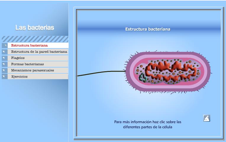 Las Bacterias Recursos Educativos Digitales
