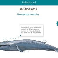 HTML5: Ballena azul